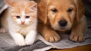 chuyển nhà khi có chó mèo